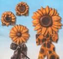 Forma - Slunečnice