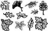 Gelová razítka - Listy 10 x 15 cm
